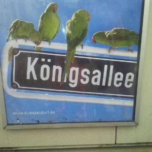 Königsalleevögel