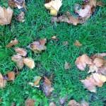 Ultima Ratio. Gras und Blätter.